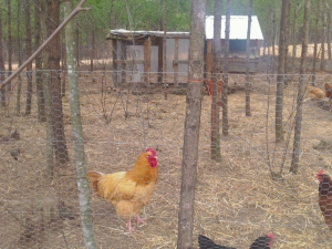 Sustainable Homes and Intentional Community Planning